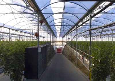 interior invernadero